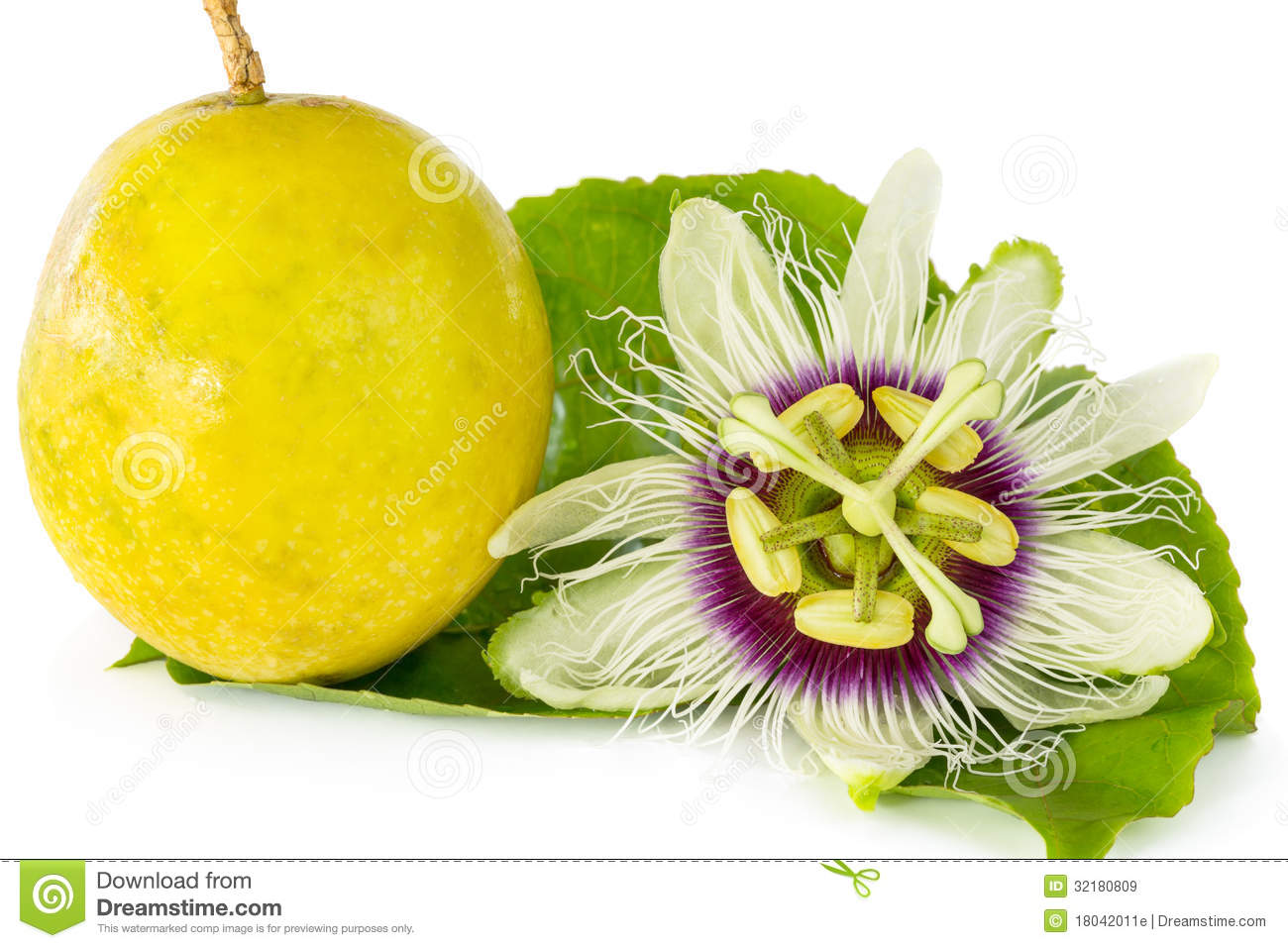 Good Royalty Free Stock Photo. Download Passion Fruit Flower ...