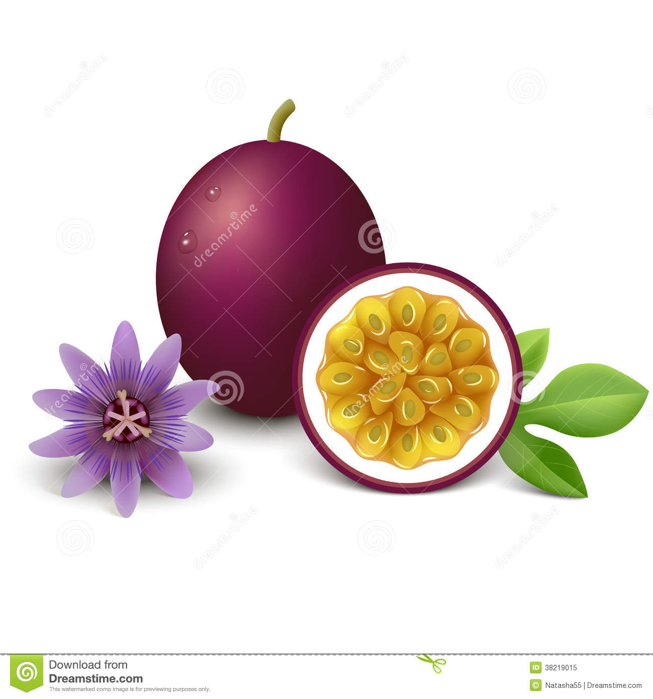 Passion Fruit Vector Illustration Royalty Free Stock