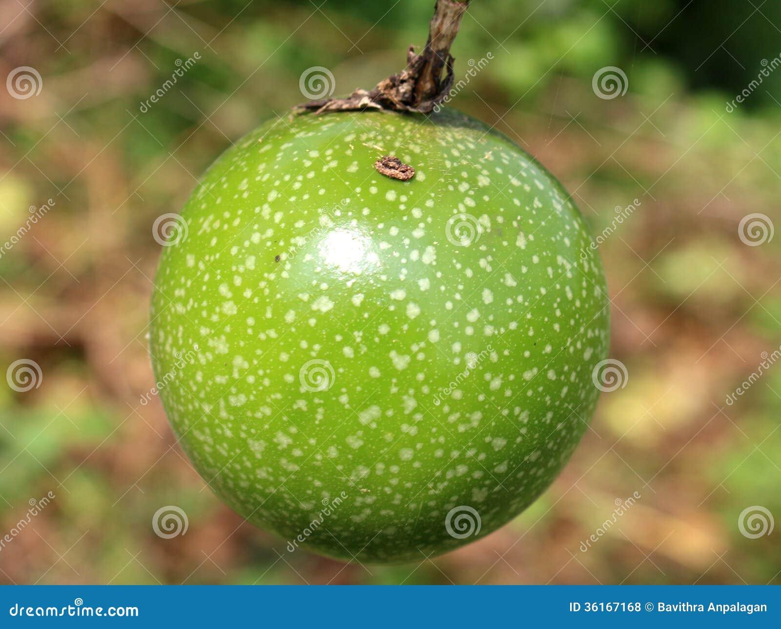 Orange Fruit Vector Passion Fruit Royalty ...