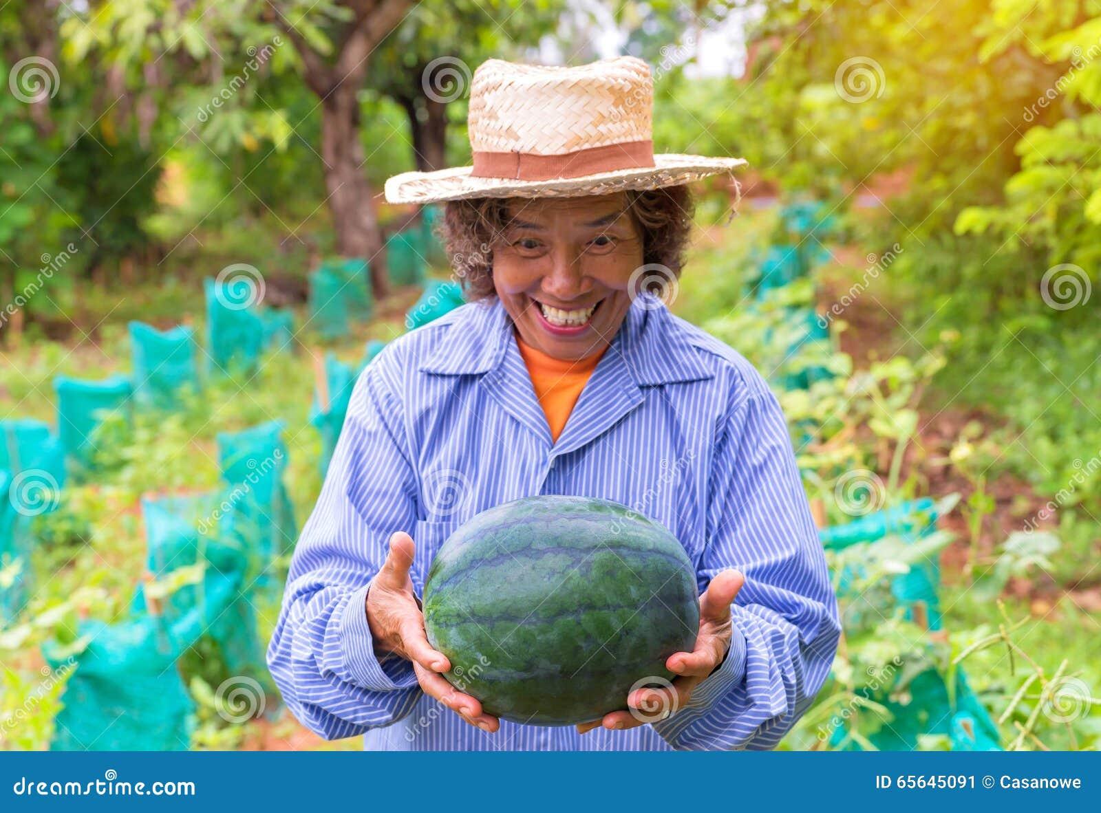 Pastèque supérieure de prise de femme d agriculteur dans la ferme