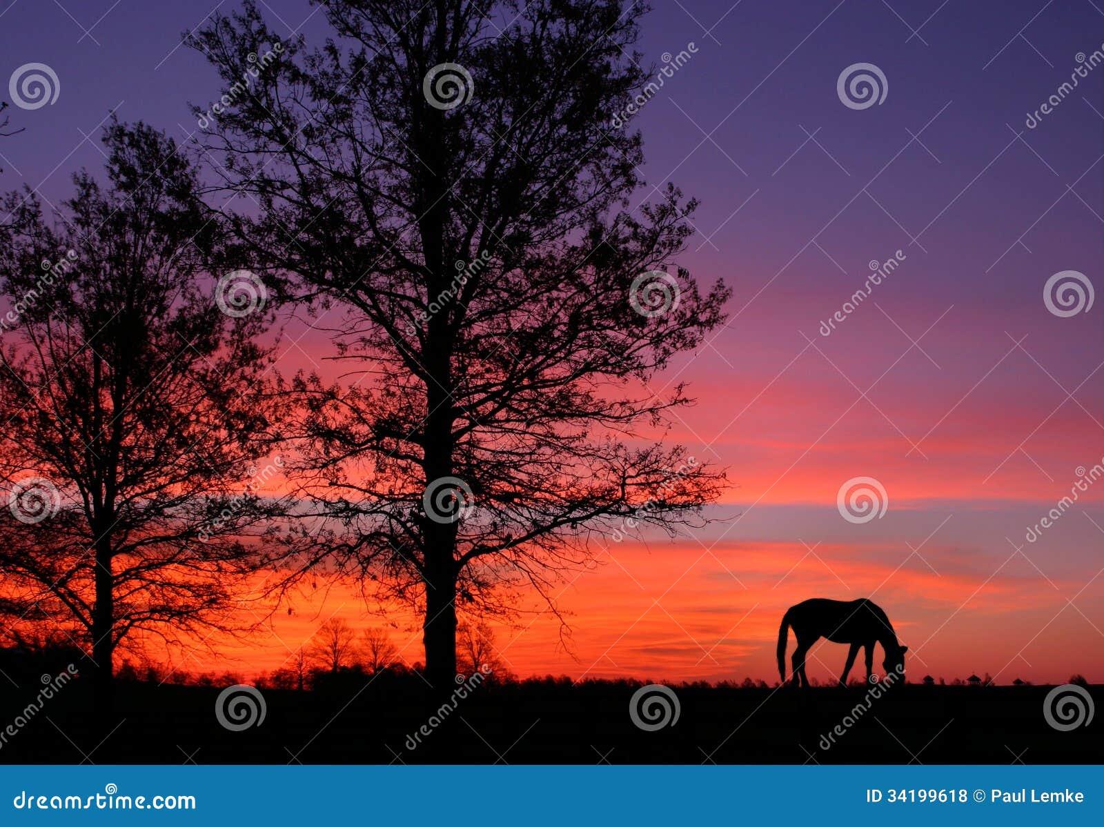 Pastagem no nascer do sol