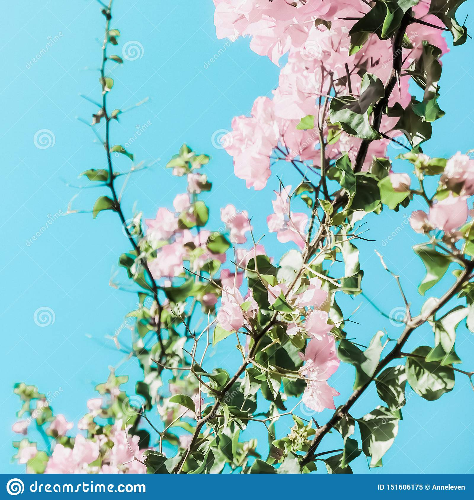 Pastel pink blooming flowers and blue sky in a dream garden, floral background