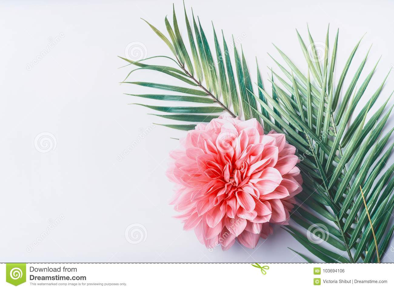 Pastel Pink Flower And Tropical Palm Leaves On White Desktop Background Top View Creative Layout With Copy Space Stock Photo Image Of Natural Layout 103694106 We hope you enjoy our growing collection of hd images to use as a background or home screen for your smartphone or computer. https www dreamstime com pastel pink flower tropical palm leaves white desktop background top view creative layout copy space pastel pink image103694106
