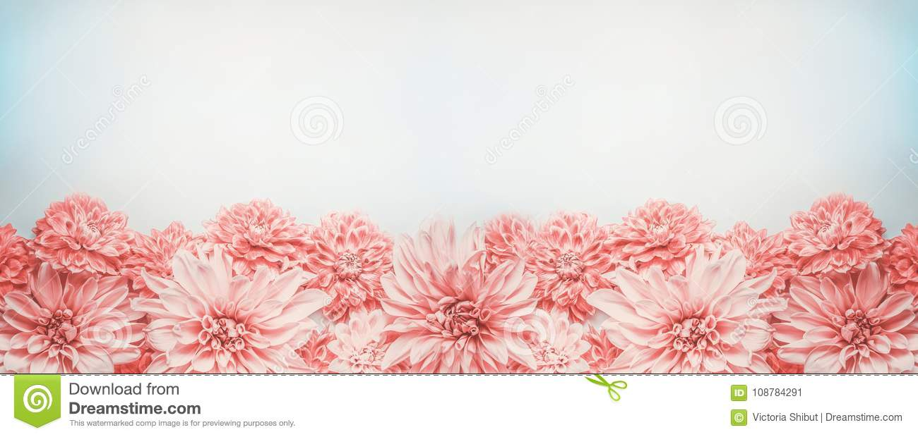 Pastel pink flowers banner or border on pale blue background, top view. Floral layout