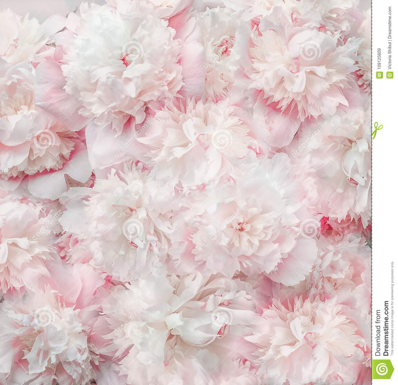 Pastel pink white flowers and petals background soft tone peonies pastel pink white flowers and petals background soft tone peonies bloom top view mightylinksfo
