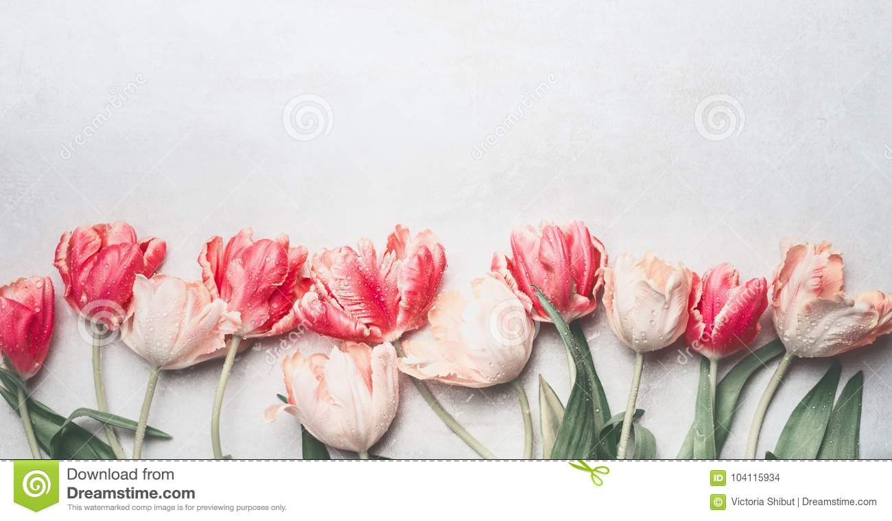 pastel tulips flowers with water drops top view border