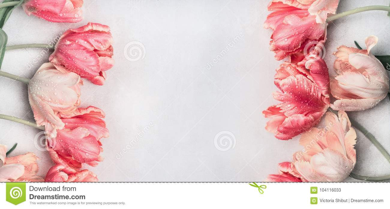 Download Pastel Tulips Flowers With Water Drops, Top View, Frame Or Banner. Layout Or Springtime Greeting Card For Mothers Day,birthday Stock Image - Image of romance, background: 104116033