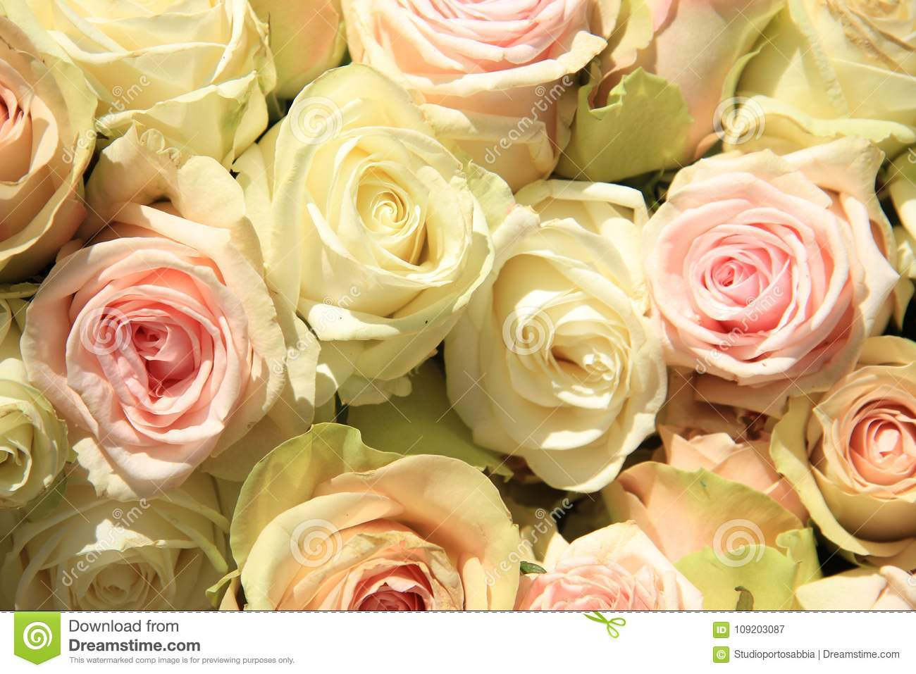 Pastel Wedding Bouquet Stock Image Image Of Roses Colors 109203087