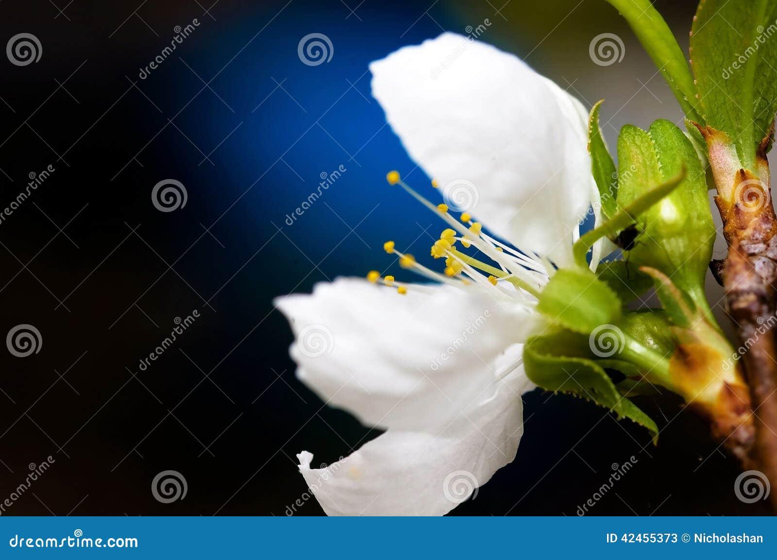 Pastelltöne Frühlings-Blütennahaufnahme