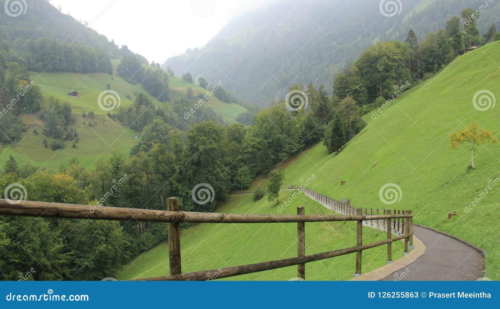 Pasto com caminho e a floresta verde