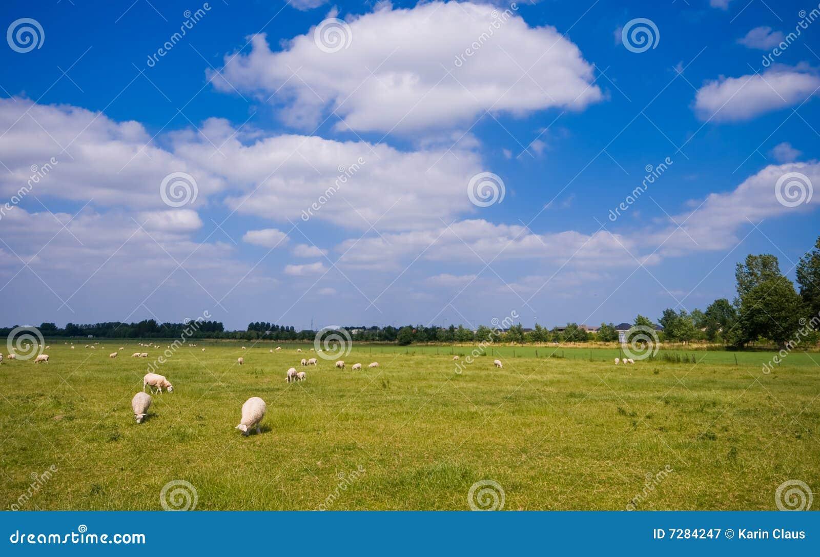 Pasto con las ovejas y las nubes