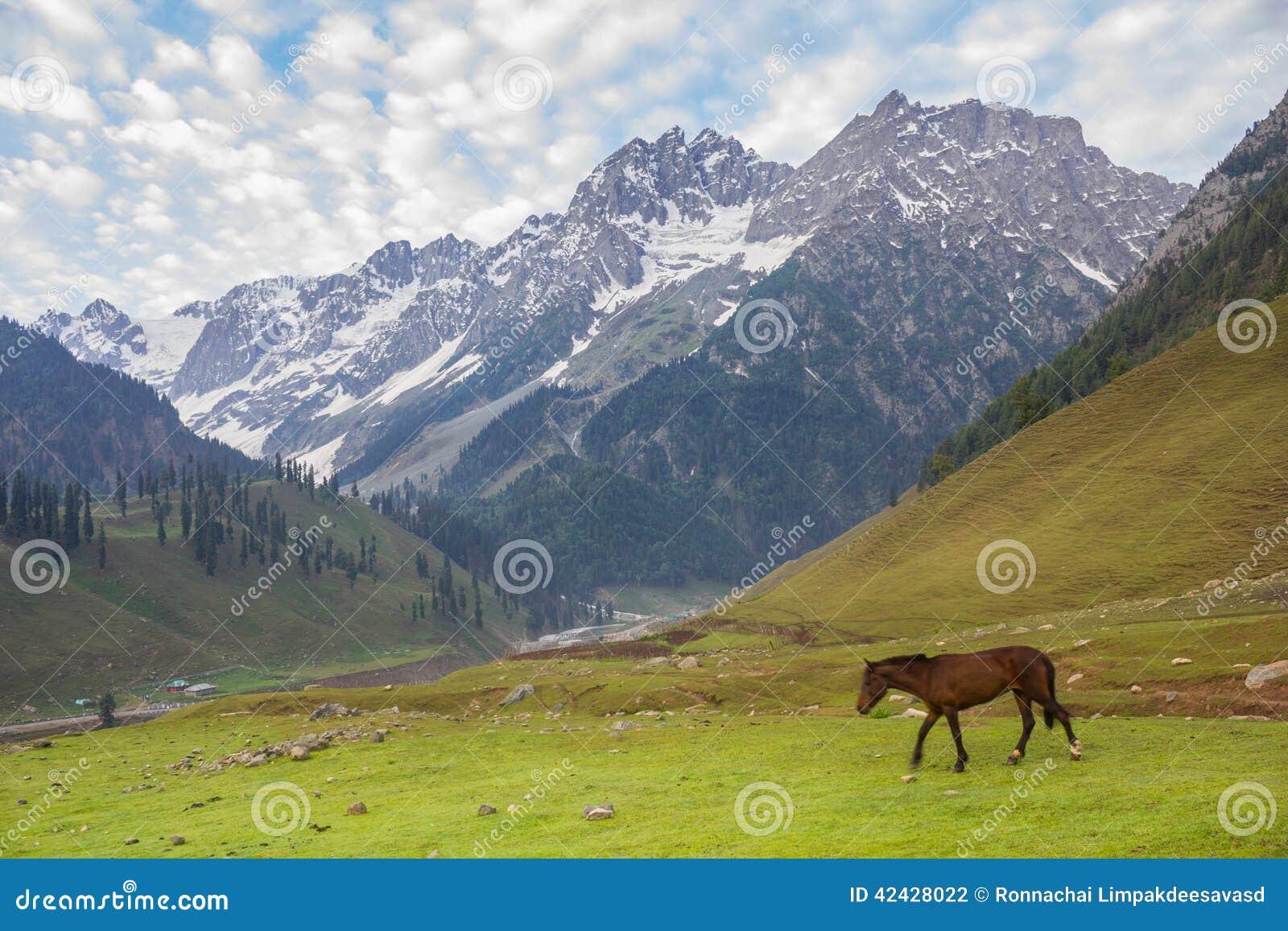 Pasto de caballos en las montañas