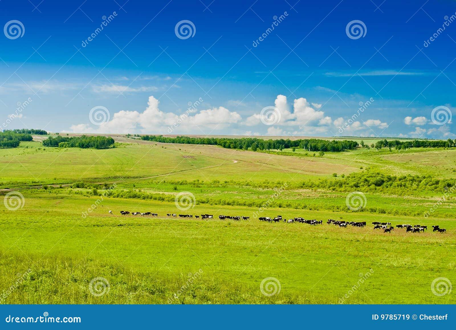Pasto de vacas en pasto