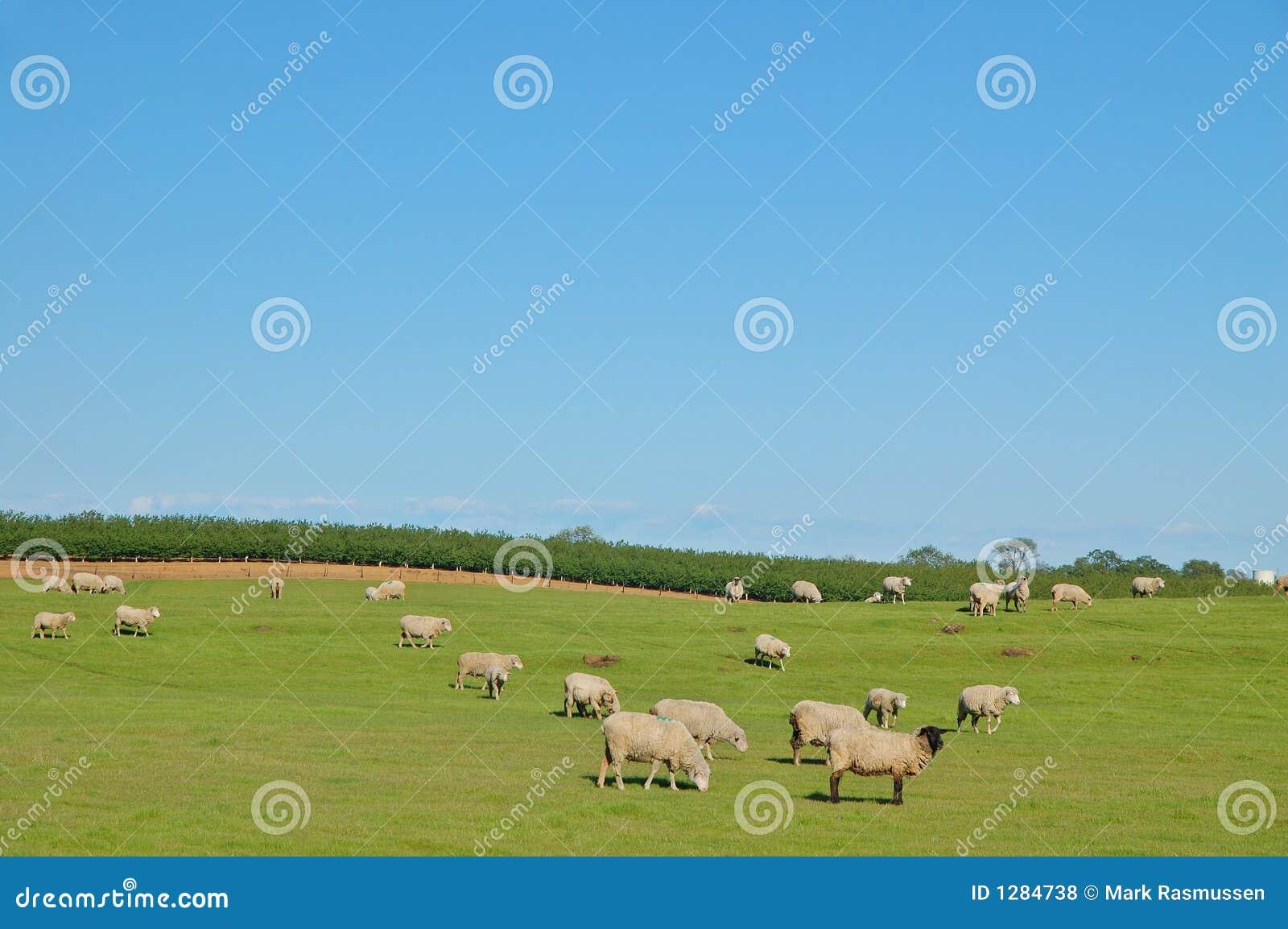 Pasto rural