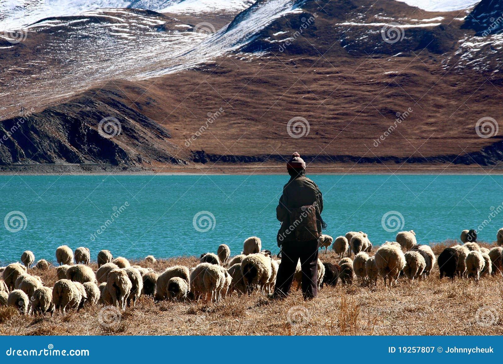 Pastor de Tíbet