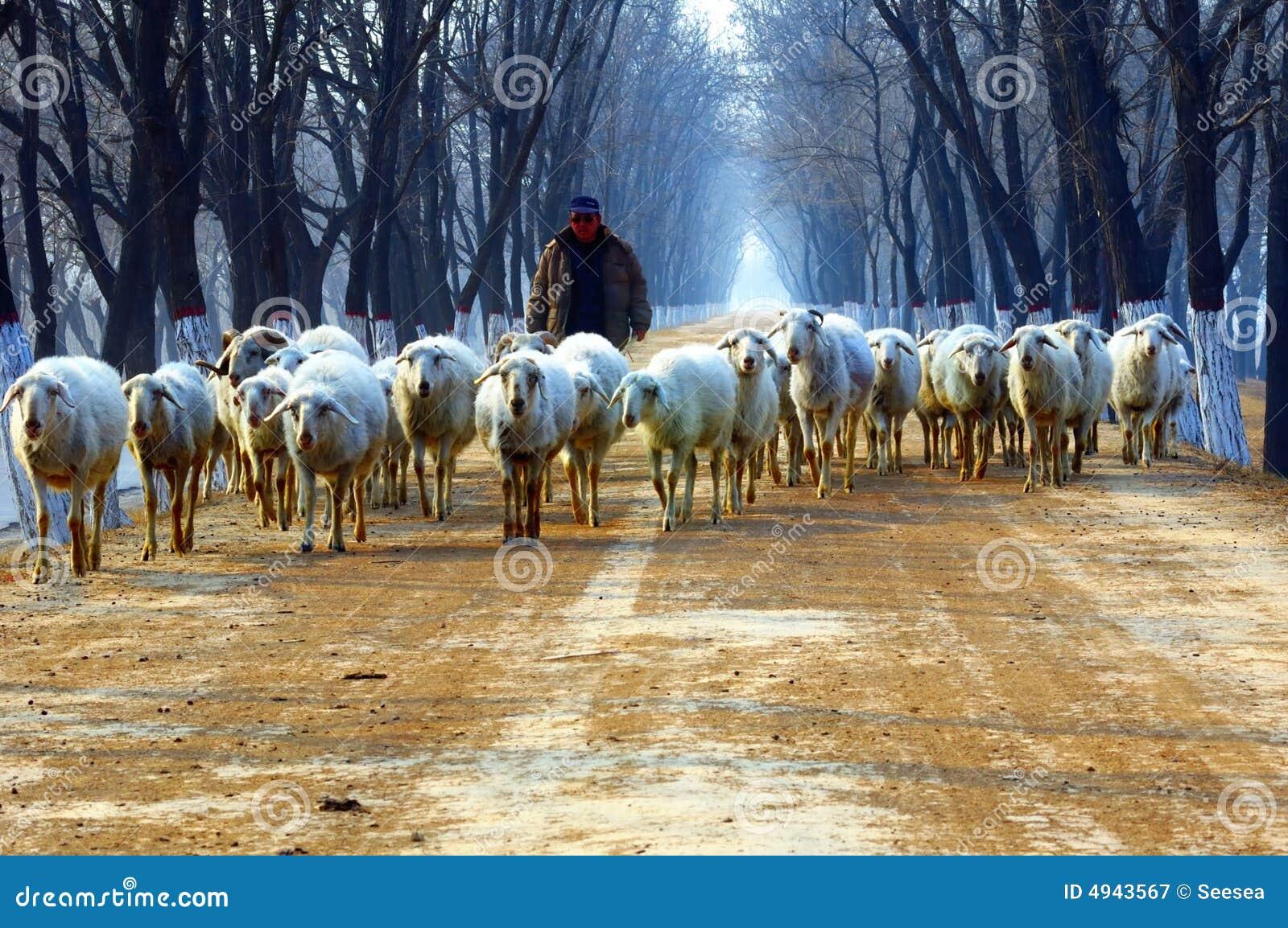 Pastor na estrada secundária
