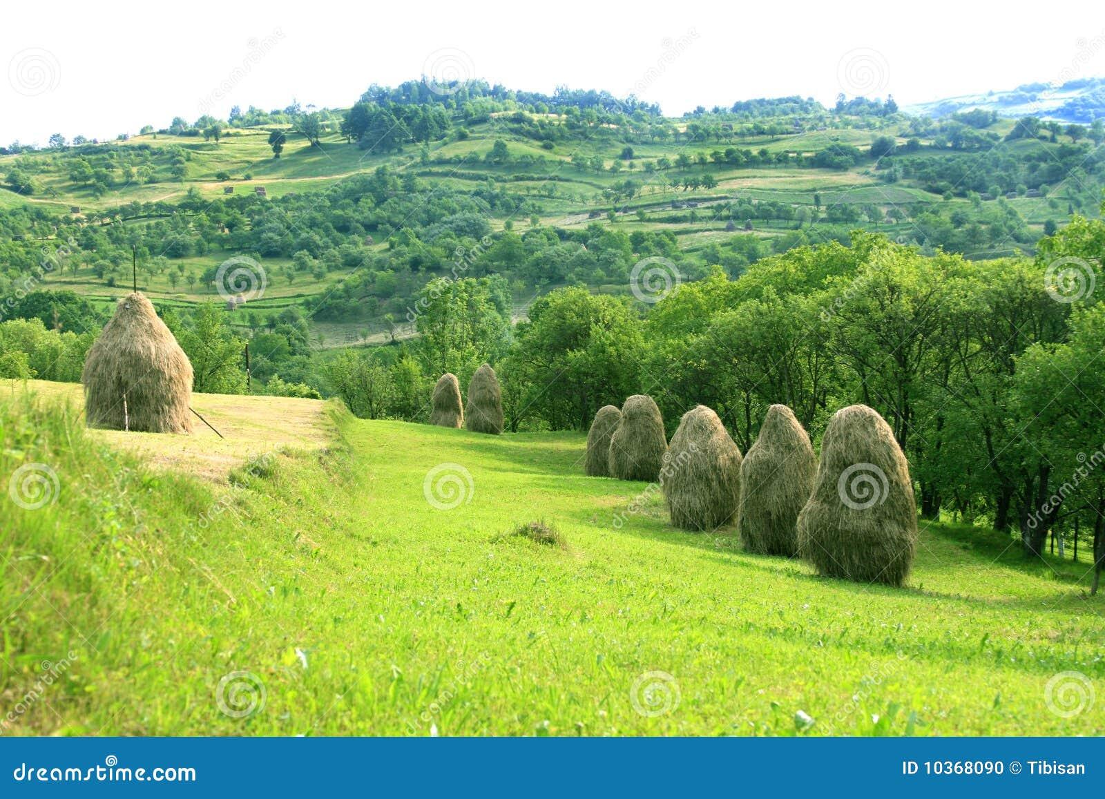 Pastoral landscape maramures romania stock photo for Romania landscape