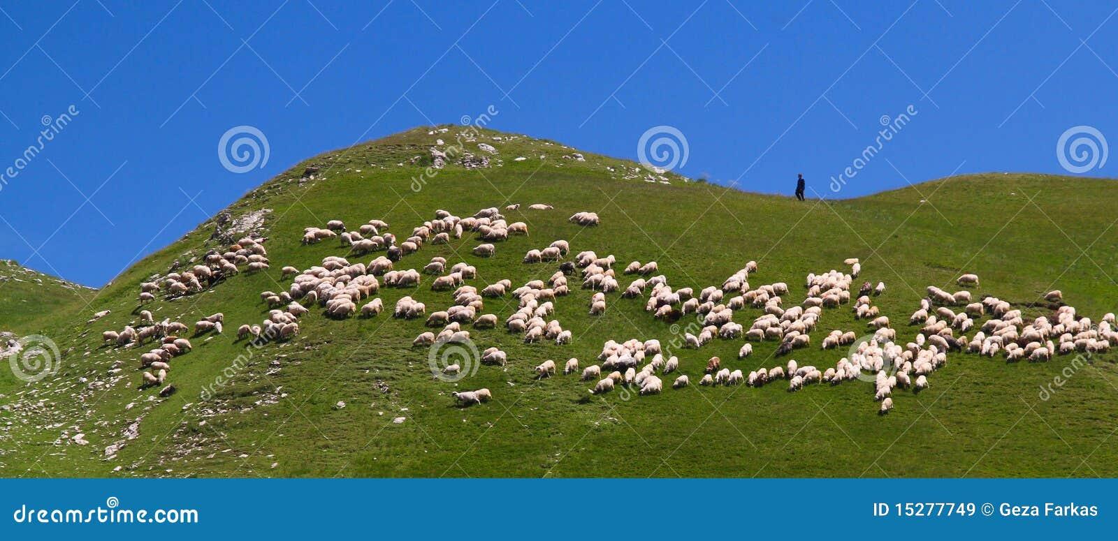 Pastore e la sua moltitudine