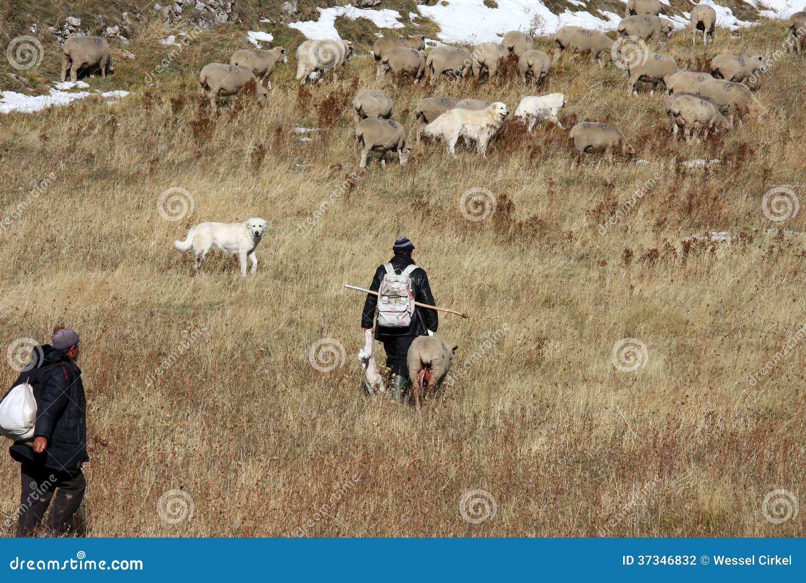 Pastori con gli agnelli neonati, Gran Sasso, Italia