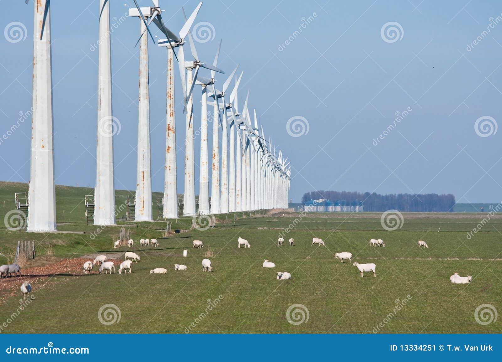 Pastwiskowi rzędu cakli wiatraczki