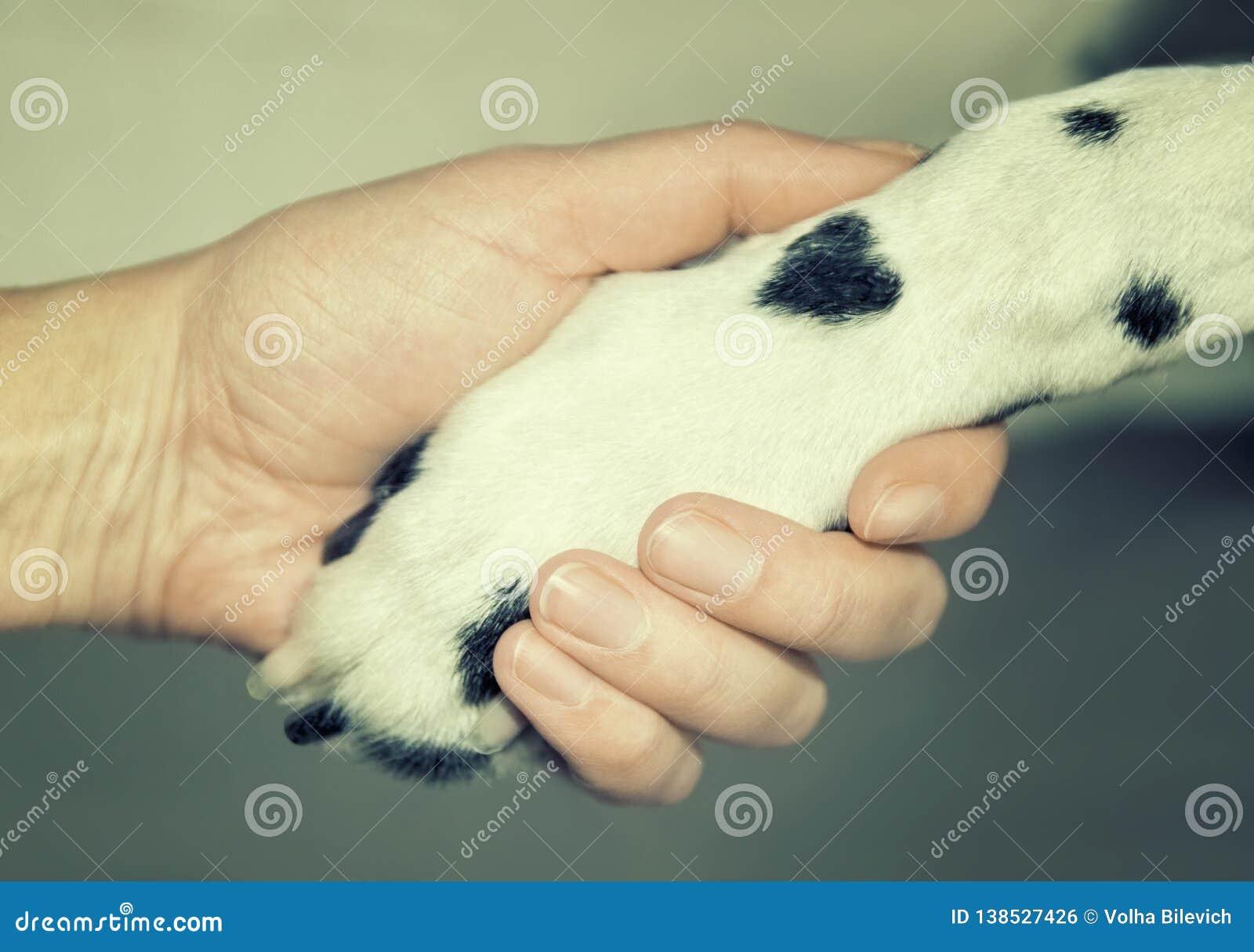 Pata dálmata del perro con un punto bajo la forma de corazón y cierre humano de la mano para arriba Amistad, confianza y amor ent