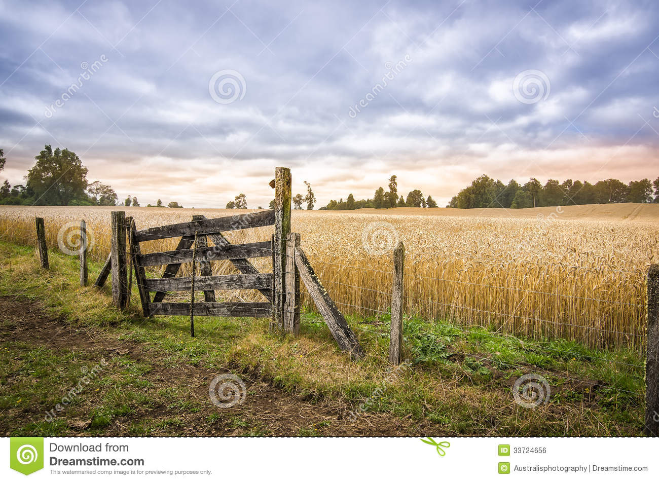 Patagonia, Chile. Farm Gate And Cornfield. Royalty Free Stock Image ...