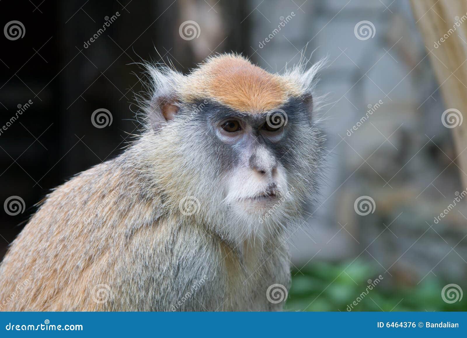 Patas de singe