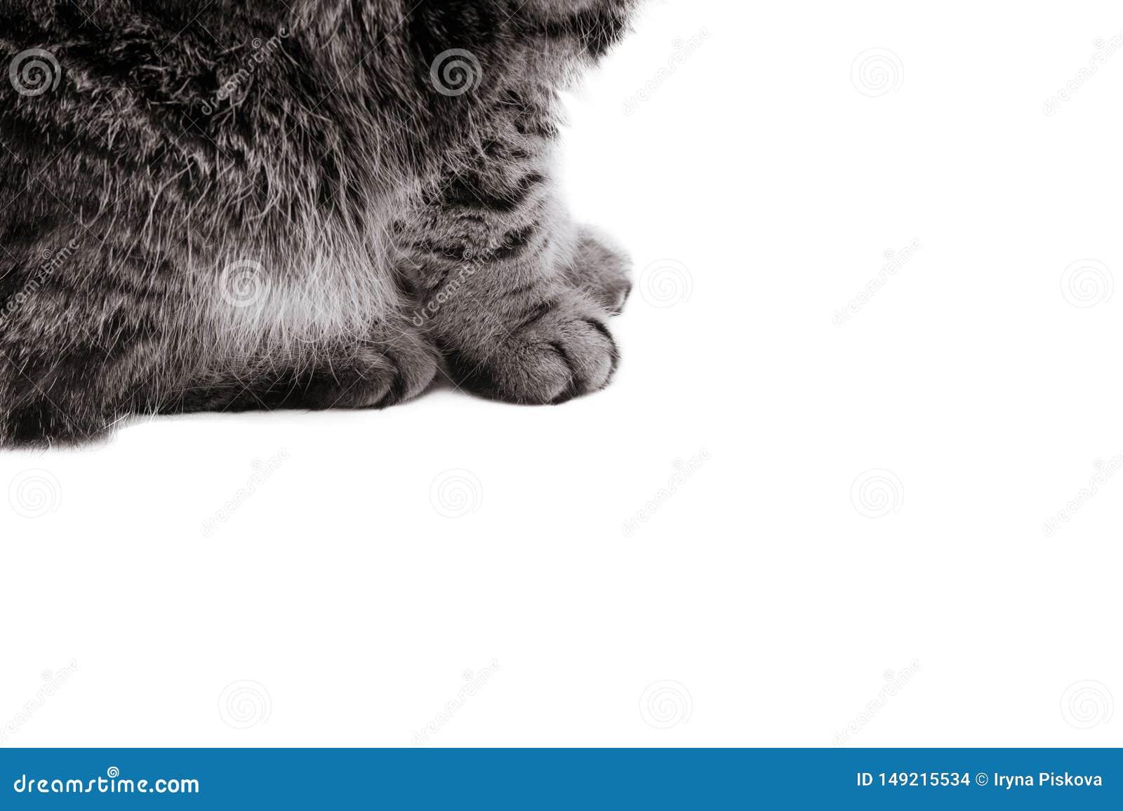 Patas del gato aisladas en el fondo blanco