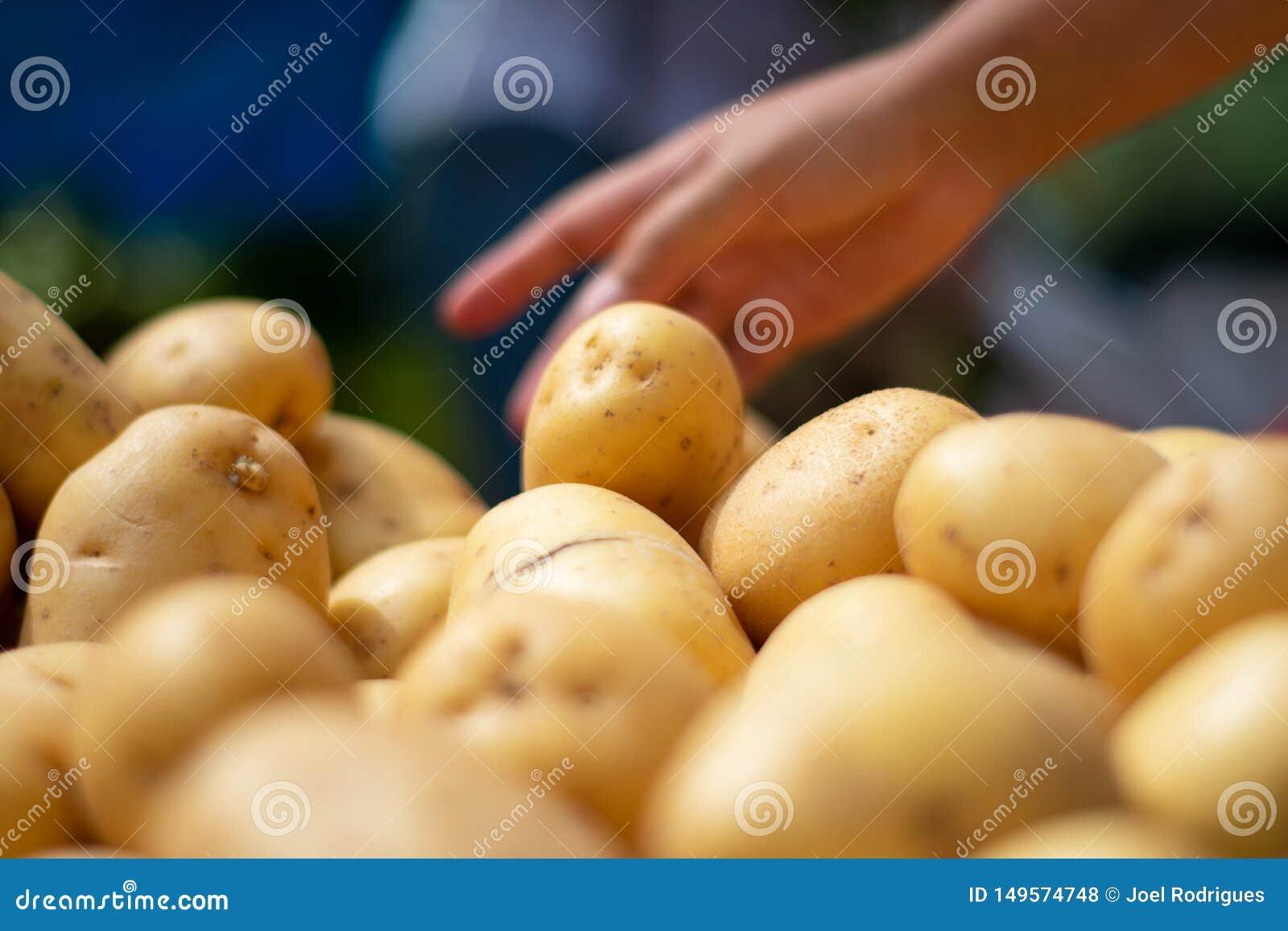 Patata di raccolto della mano dal mucchio del mercato