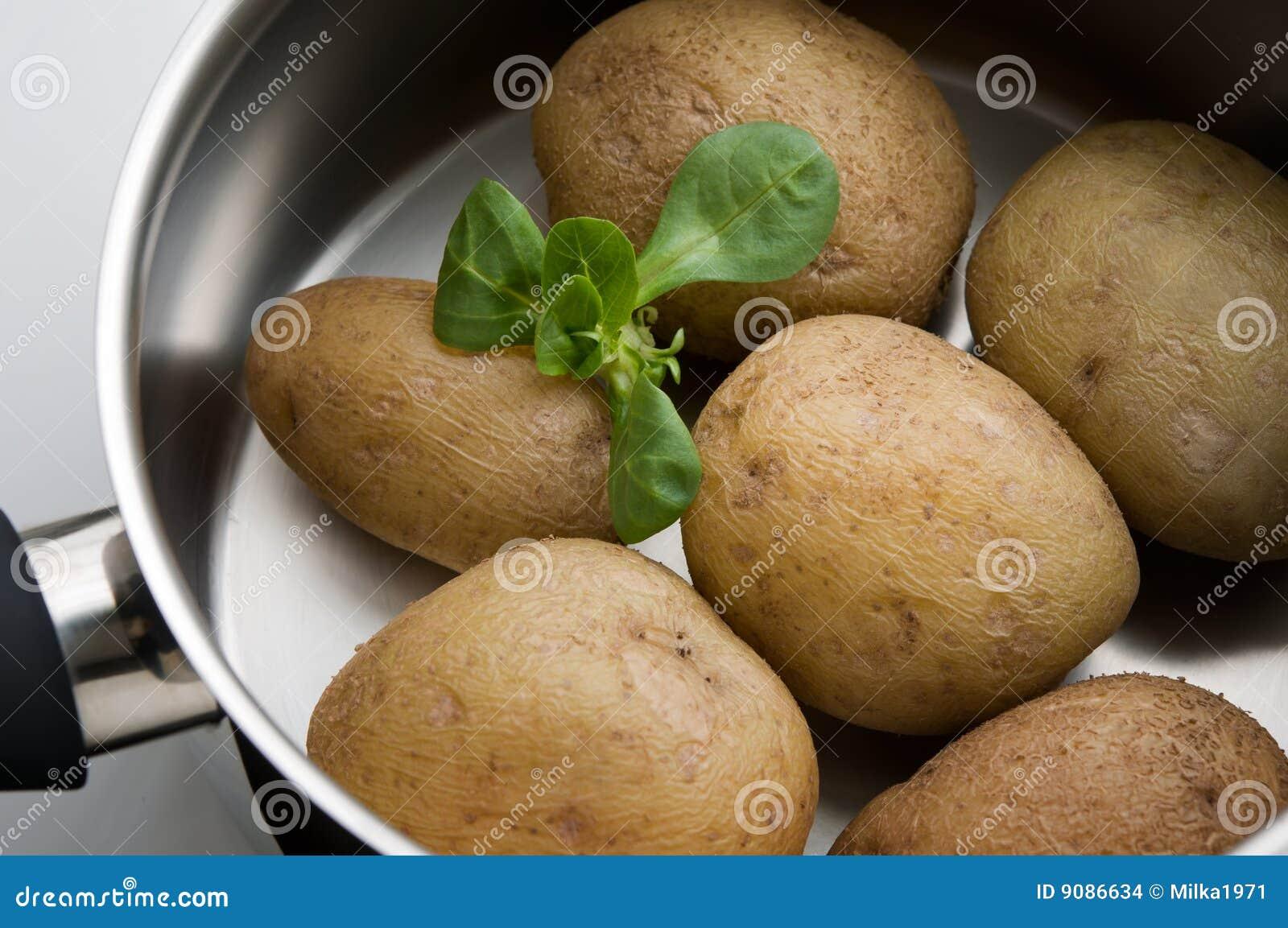 Patats kochte