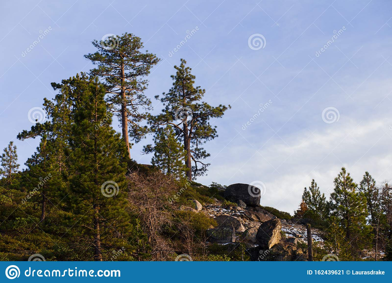 Patches Of Snow On Sierra Nevada Mountains In A Pine Tree ...