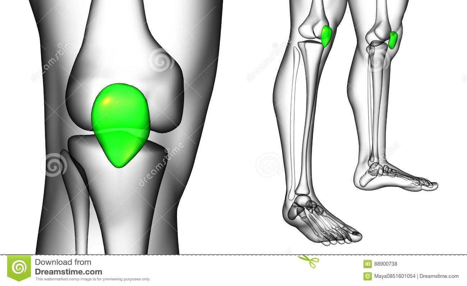 Patella bone stock illustration. Illustration of patella - 88900738