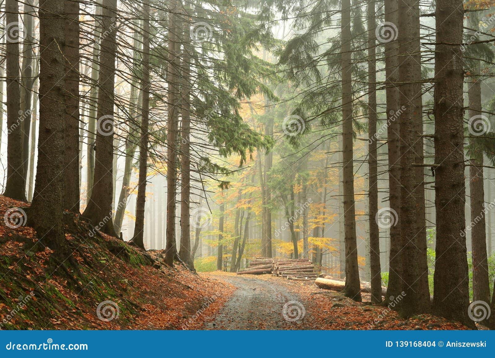 Trail through the misty autumn forest