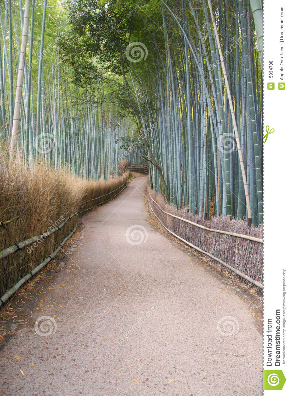 Path and bamboo forest in Kyoto Japan