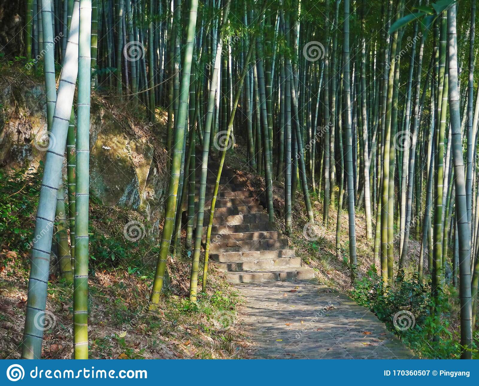 Path Of Steps With Bamboos In Sunny Day Stock Image Image Of