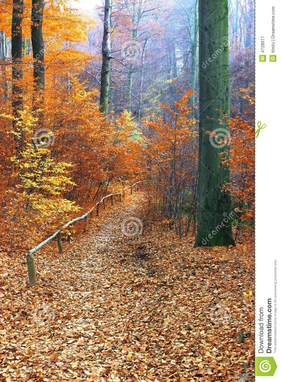 Path in beautiful fall forest focus set in foreground on a large tree