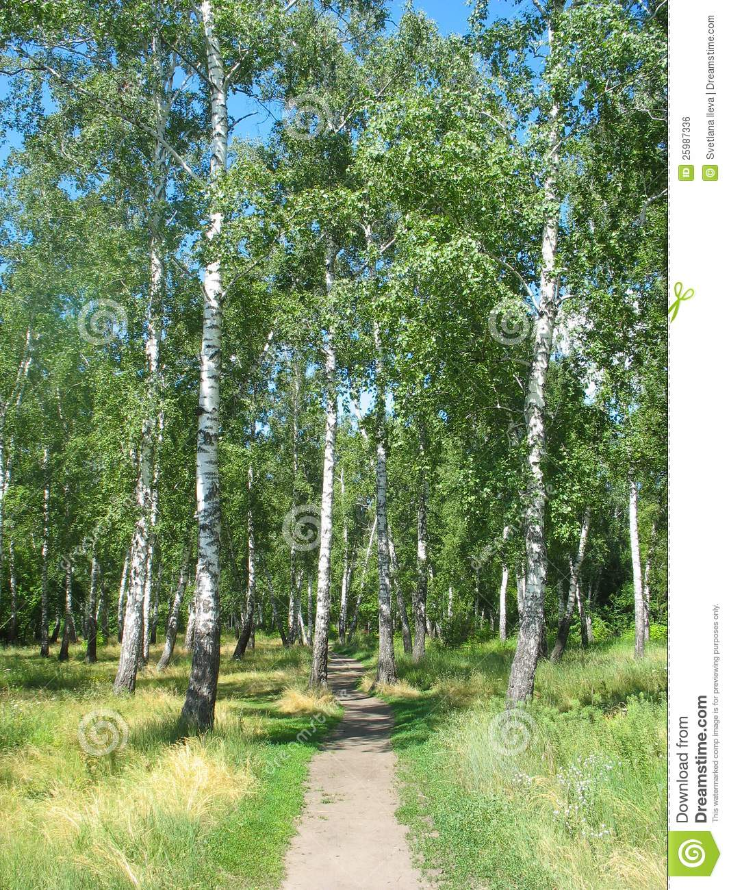 path in the birch - photo #18