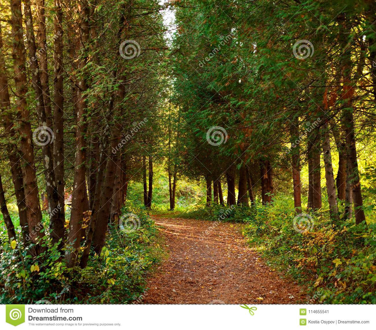 Path In Botanical Garden Park With Trees Stock Image - Image of ...