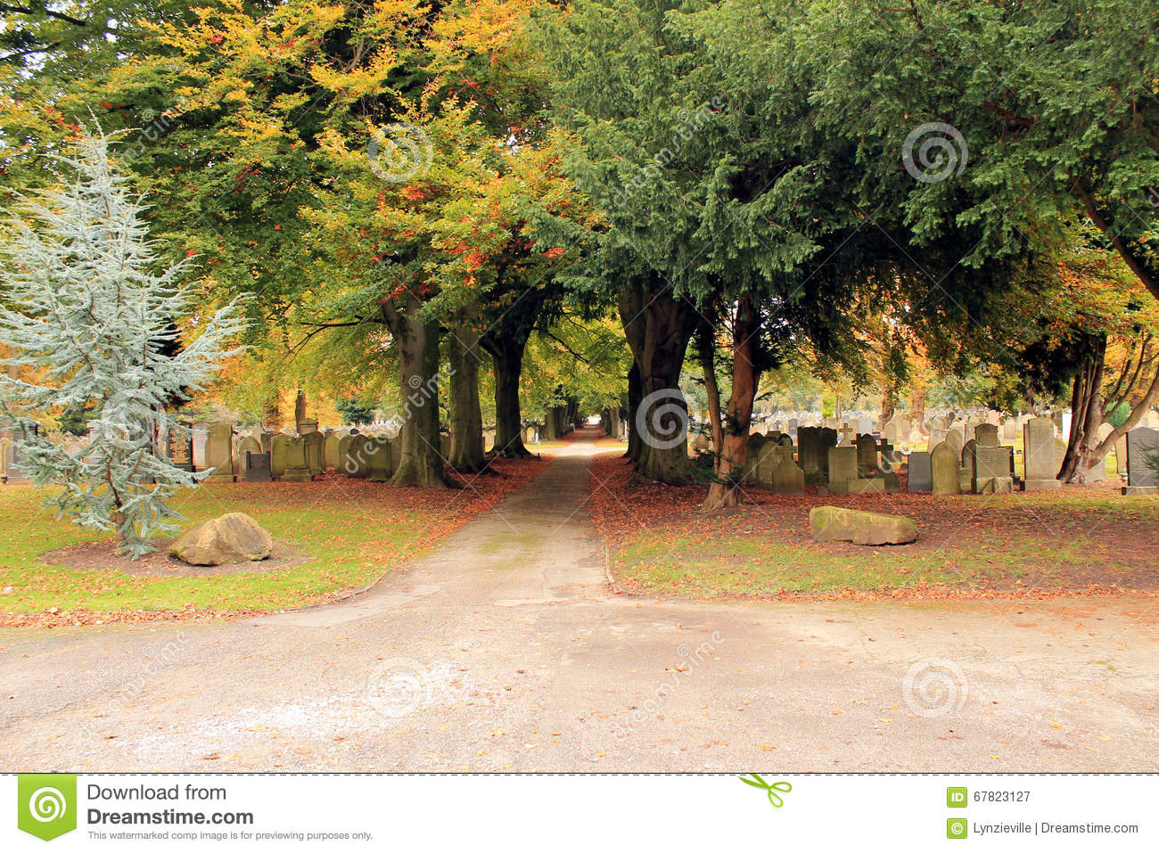 Path through cemetery under a canopy of trees