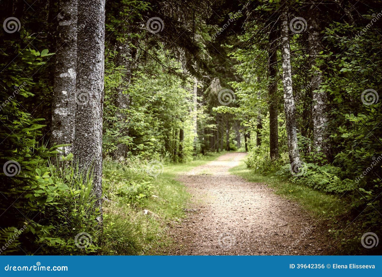 Path in dark moody forest