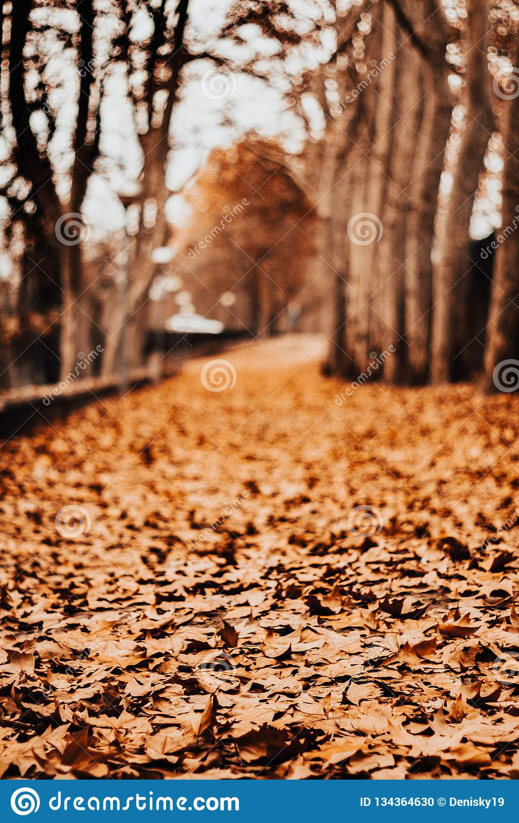 Path of leaves in autumn