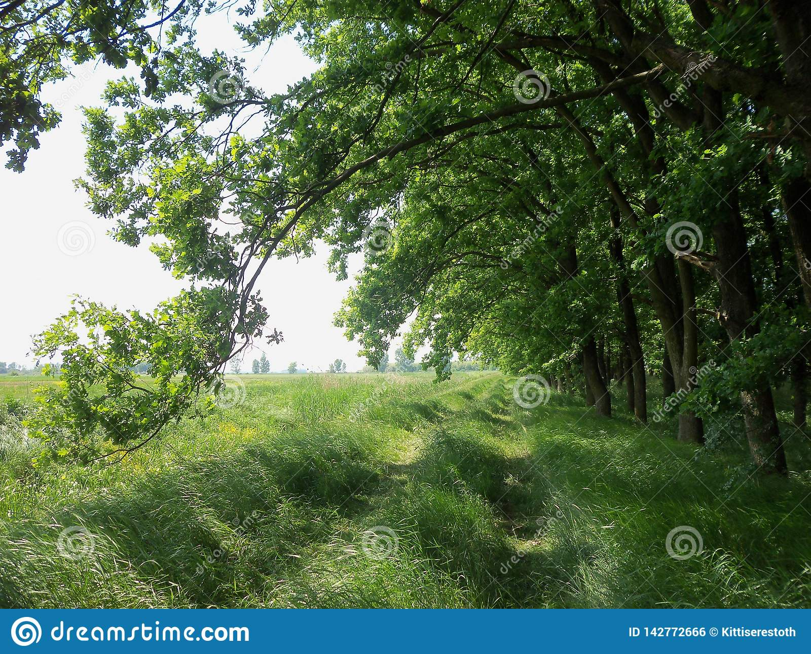 Path between the forest and the fields
