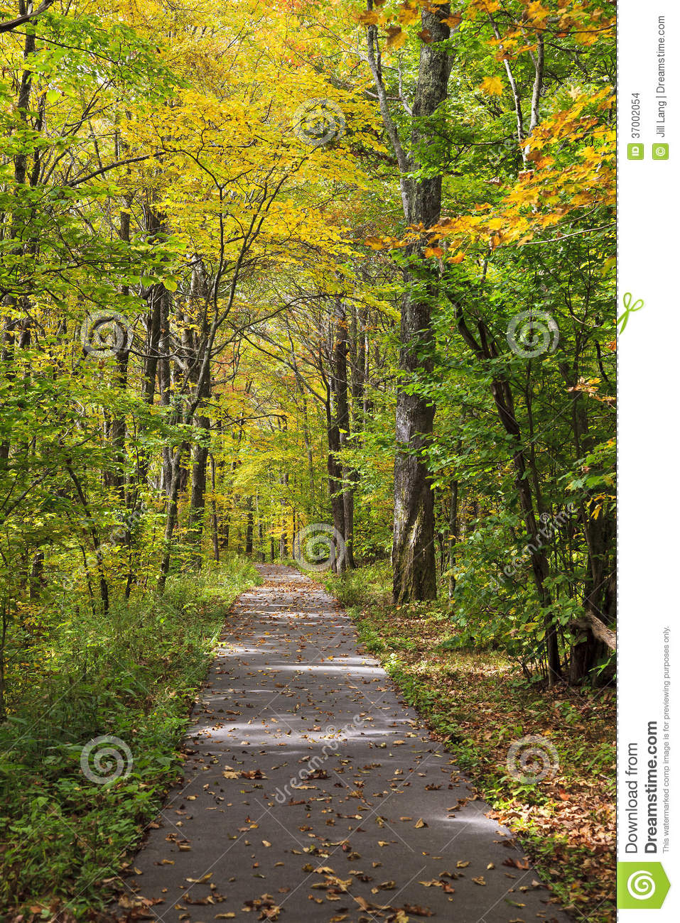 Walking path in the woods in the fall off of the Cherohala Skyway.