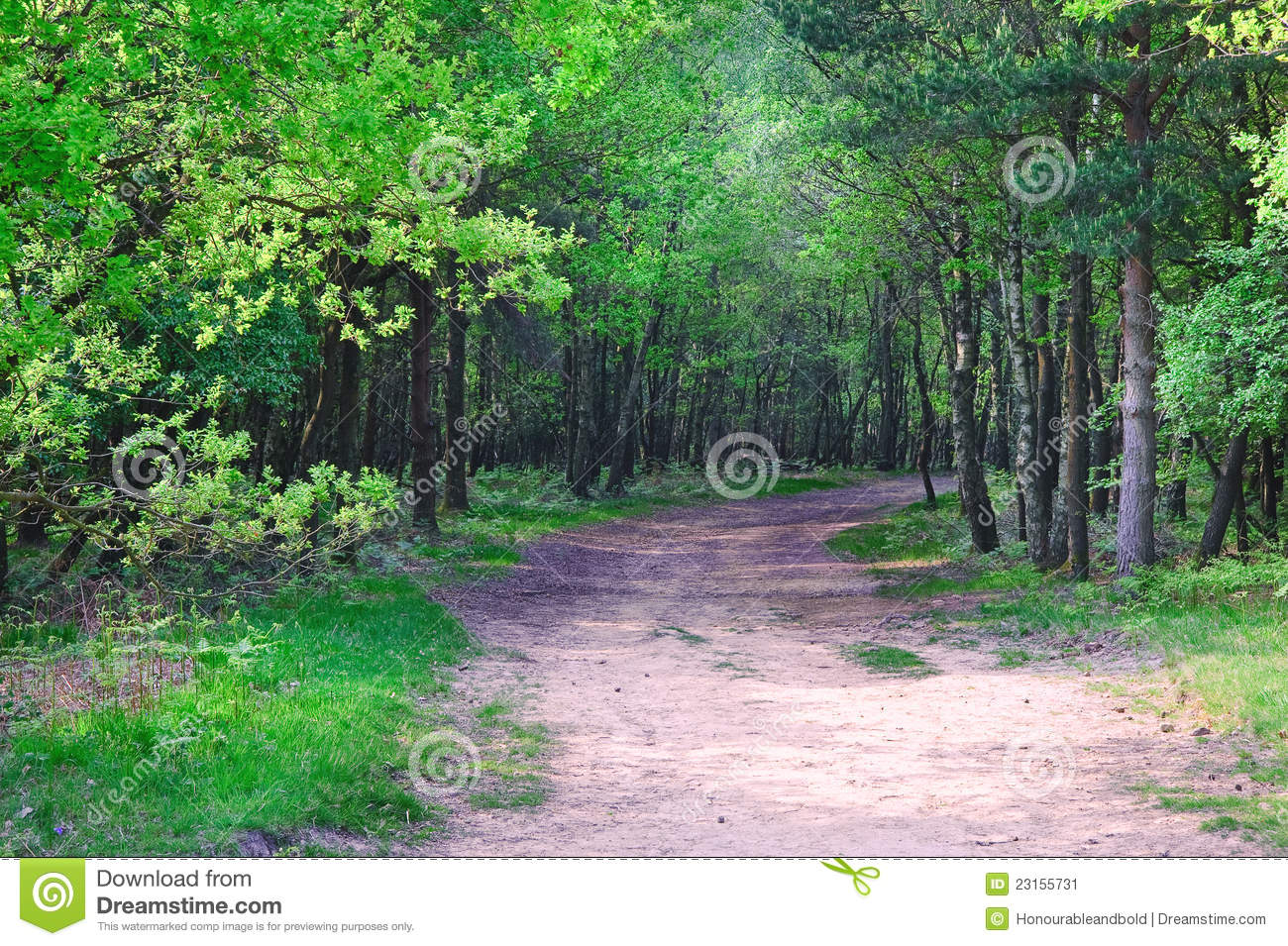 green path into the - photo #10