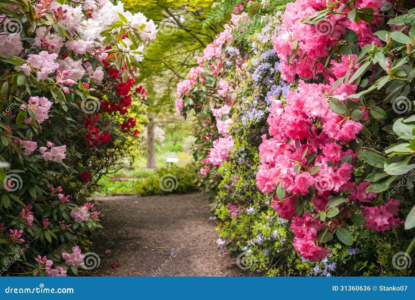 Beautiful flower garden path - Beautiful Flowers Garden Path