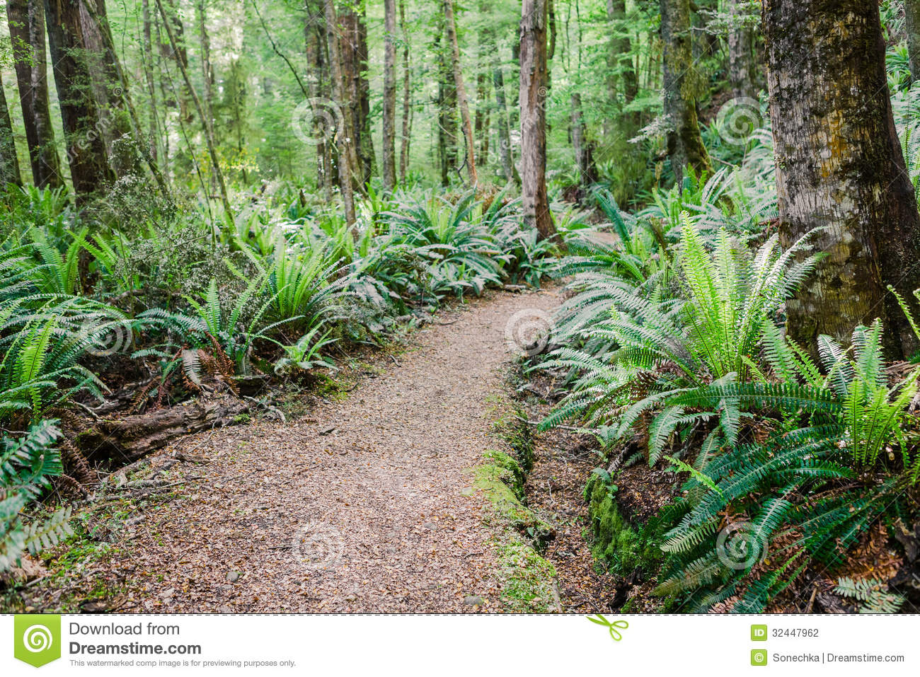 green path into the - photo #8