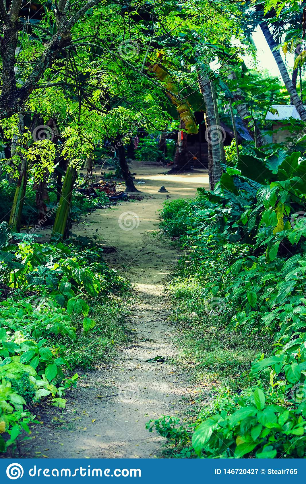 A path in the jungle at Havelock Island