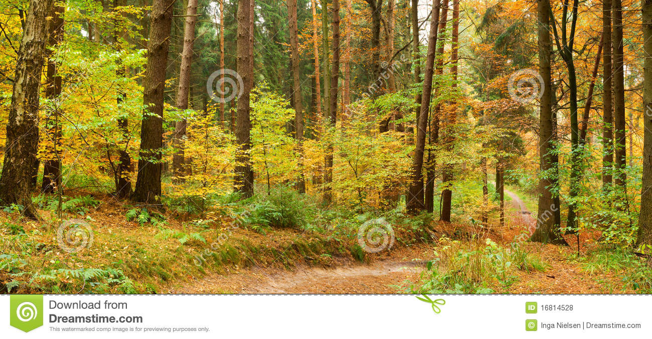 Path in mixed autumn forest
