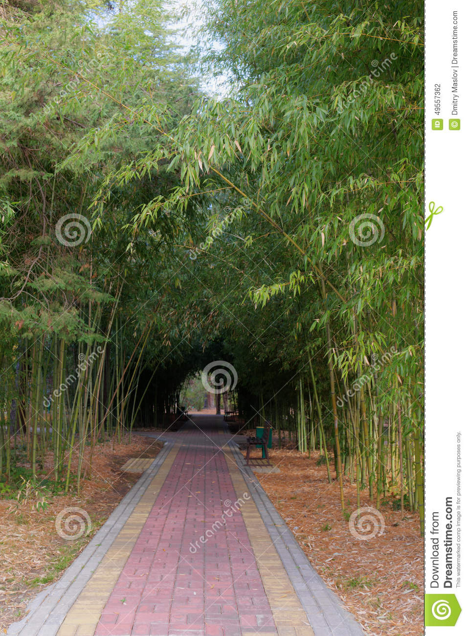 Path In The Shade Of Bamboo Stock Photo Image 49557362