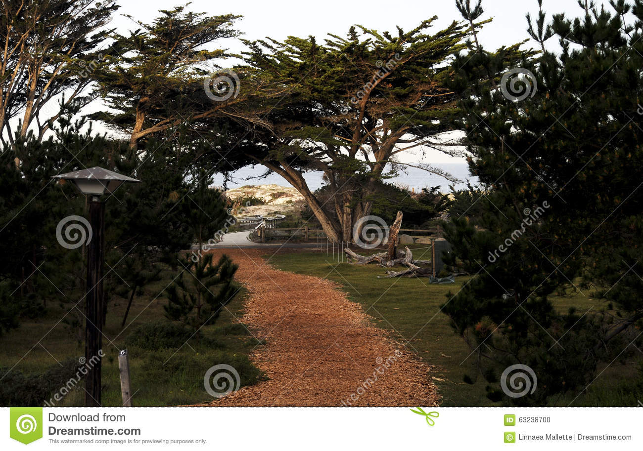 Asilomar State Beach And Conference Grounds